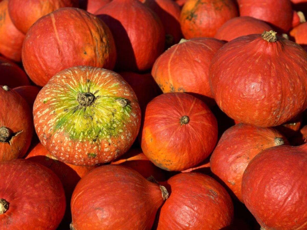 pumpkin-3636239_1920-1024x683-1200x900