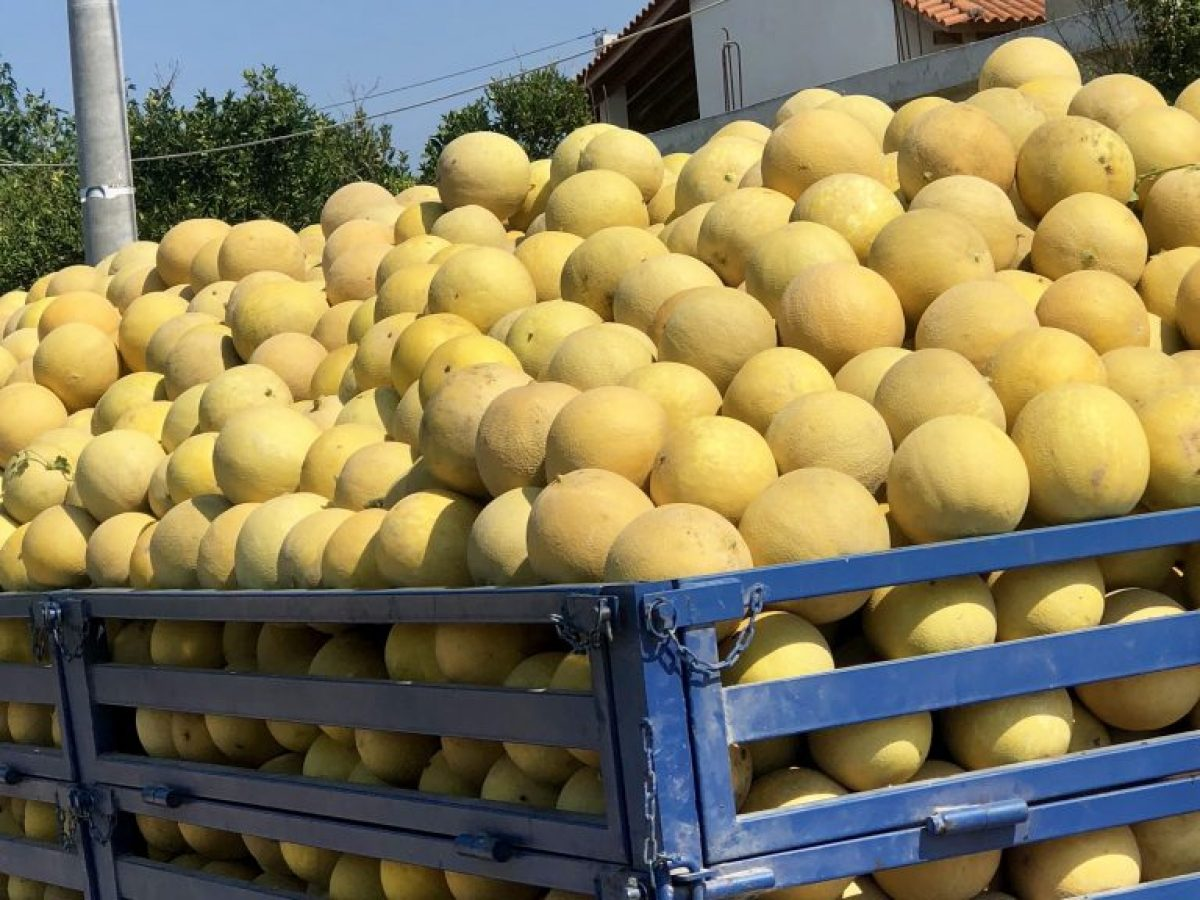 Melon w diecie